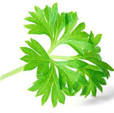 herb-parsley