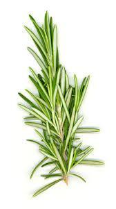 herb-rosemary