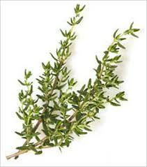 herb-thyme
