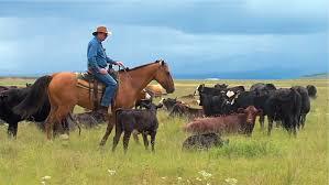 mexican grasslands