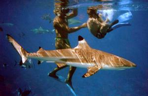 shark-fun-2