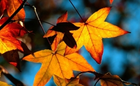 colors-of-fall