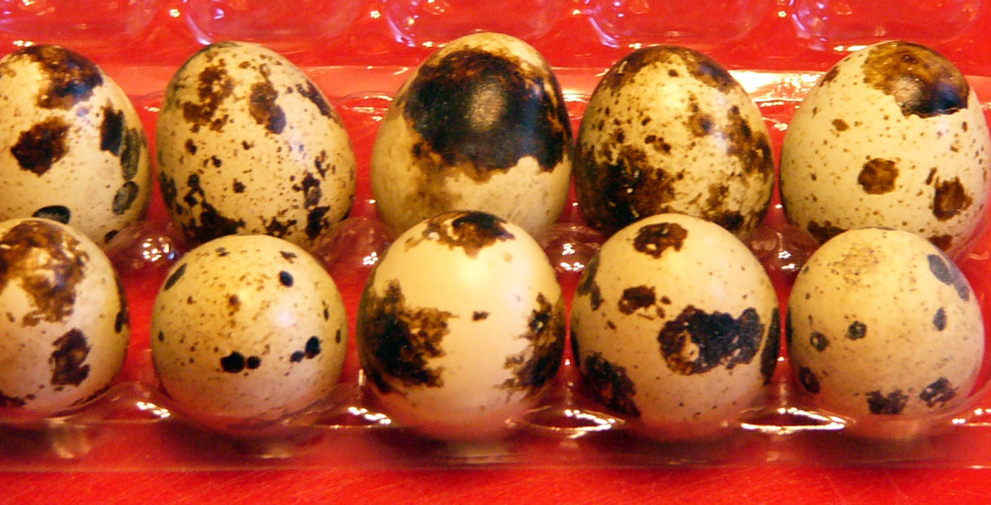 Scrambled Quail Eggs – Live andLearn