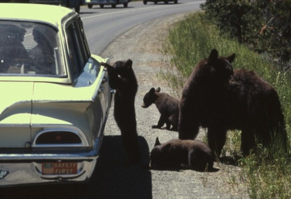 Crazy People with Bears (10)