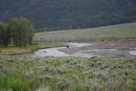 Yellowstone Day 5 (312)