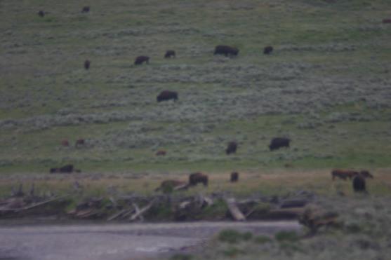 Yellowstone Day 5 (314)
