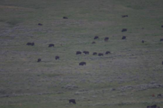 Yellowstone Day 5 (315)