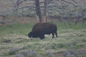 Yellowstone Day 5 (316)