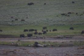 Yellowstone Day 5 (317)