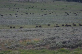 Yellowstone Day 5 (322)