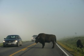 Yellowstone Day 6 (10)