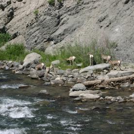 Yellowstone Day 6 (115)