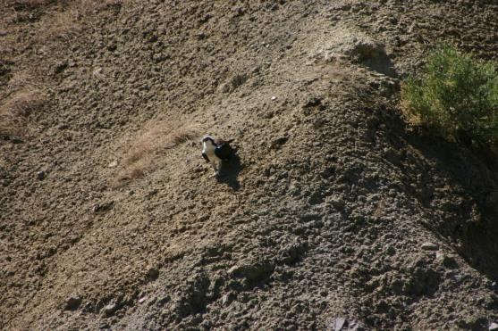 Yellowstone Day 6 (116)
