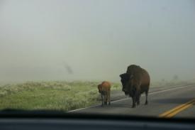 Yellowstone Day 6 (12)