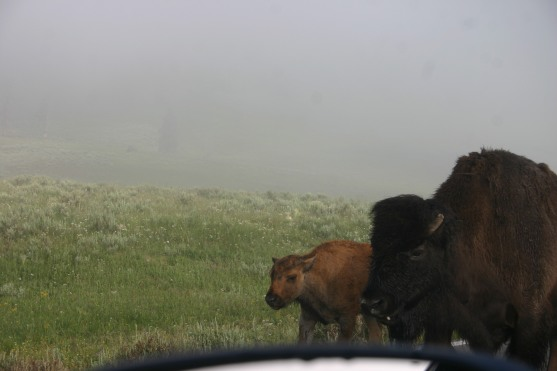 Yellowstone Day 6 (13)