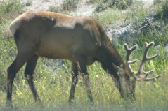 Yellowstone Day 6 (133)