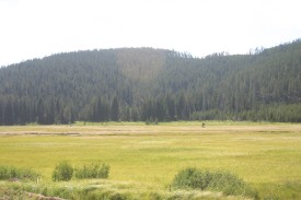 Yellowstone Day 6 (135)
