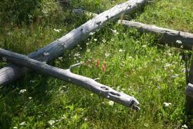 Yellowstone Day 6 (145)