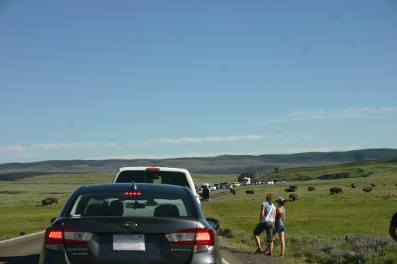 Yellowstone Day 6 (155)