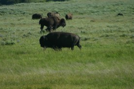 Yellowstone Day 6 (157)