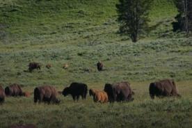 Yellowstone Day 6 (158)