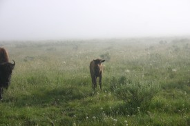 Yellowstone Day 6 (16)