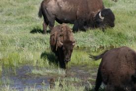 Yellowstone Day 6 (161)