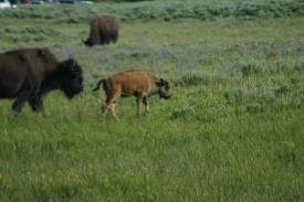 Yellowstone Day 6 (165)