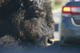 Yellowstone Day 6 (166)