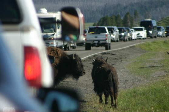 Yellowstone Day 6 (167)