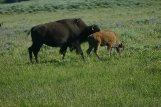 Yellowstone Day 6 (168)