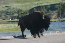 Yellowstone Day 6 (173)