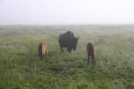 Yellowstone Day 6 (19)