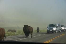 Yellowstone Day 6 (20)