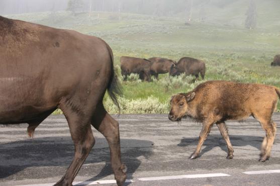 Yellowstone Day 6 (25)