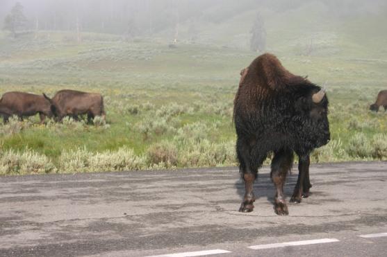 Yellowstone Day 6 (27)
