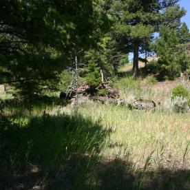 Yellowstone Day 6 (58)