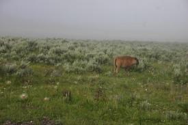Yellowstone Day 6 (6)