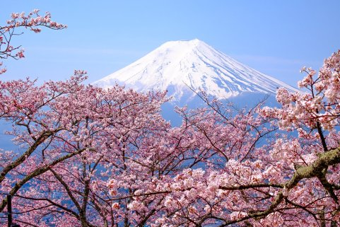 Cherry-blossoms-Japan-2-1000x667-72