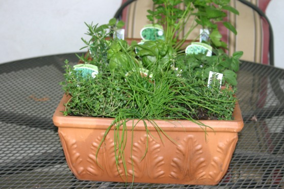 04-15 Spring Herbs (2)