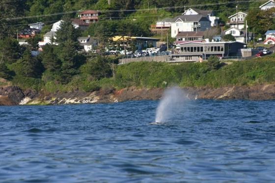 07-15-2017 - Depoe Bay Whale Watching (45)
