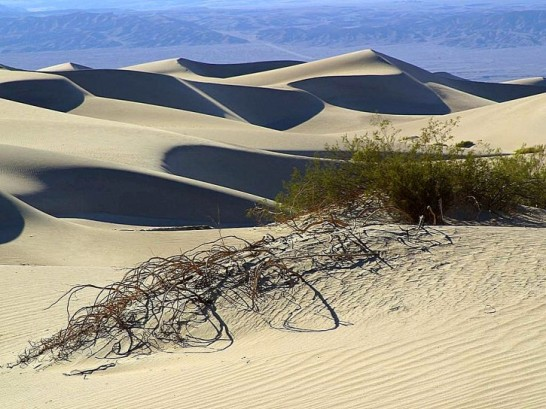 florence dunes1