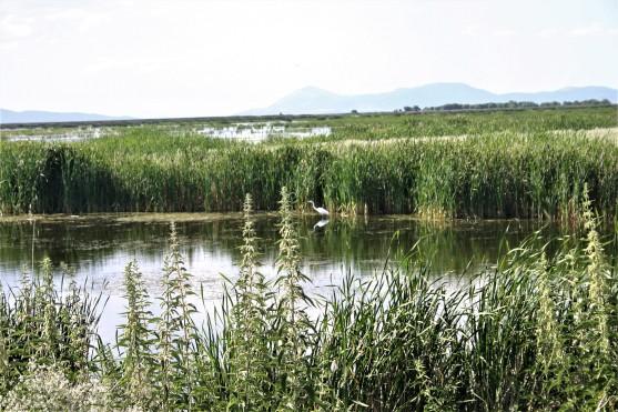 14 - Klamath Wet Lands (1)