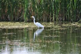 15 - Klamath Wet Lands (4)