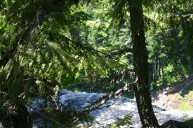 27 Salt Creek Falls (14)