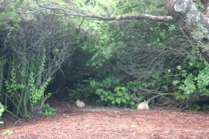 7 Bunnies (2)