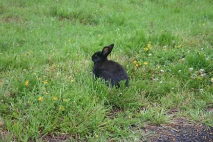8 Bunnies (3)
