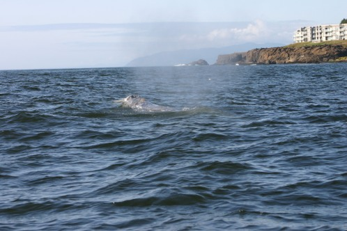 2 Whales Depoe Bay