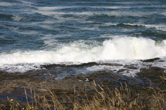 4 Depoe Bay Whales (4)