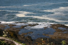 4 Depoe Bay Whales (5)